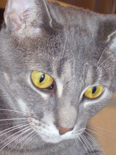 Ahh, pretty, pretty kitty